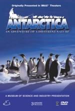 Antarktika (l) (1991) afişi