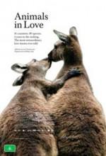 Aşıklar (2008) afişi
