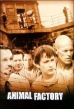 Hayvan Fabrikası (2000) afişi