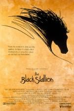 The Black Stallion (1979) afişi