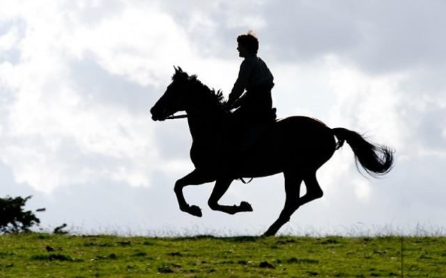 war horse 5 - Sava� At� (War Horse)