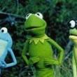 Kermitin Bataklık Yılları Resimleri