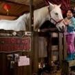 Winky's Horse Resimleri