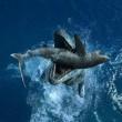 Sea Rex 3d: Journey To A Prehistoric World Resimleri