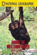 Among The Wild Chimpanzees (tv) (1984) afişi