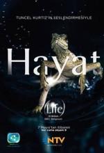 Bbc Hayat - Kuşlar (2009) afişi