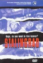 Stalingrad: Dogs, Do You Want to Live Forever? (1959) afişi