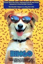 Kahraman Köpek Bingo