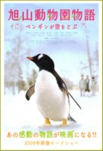 Penguins in The Sky - Asahiyama Zoo