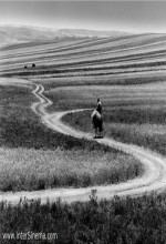 Roads Of Kiarostami (2006) afişi