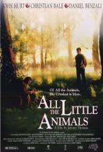 Tüm Küçük Hayvanlar
