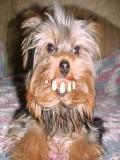 Billy The Dog profil resmi