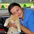 Kedi Özledi Resimleri