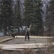 Alone in the Wilderness Resimleri