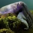 Under The Sea 3d Resimleri