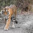 India: Kingdom Of The Tiger Resimleri