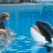 Free Willy: Escape From Pirate's Cove Resimleri